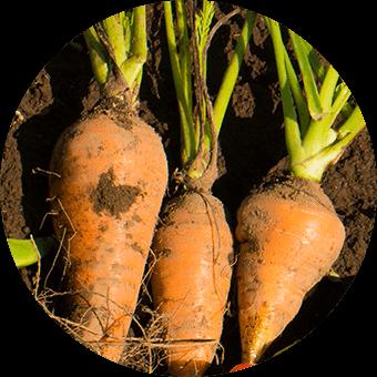 Item carrot